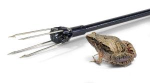 frog-gig